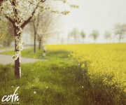 YellowFields_1